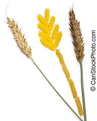 Natural ear of wheat and ear from pasta