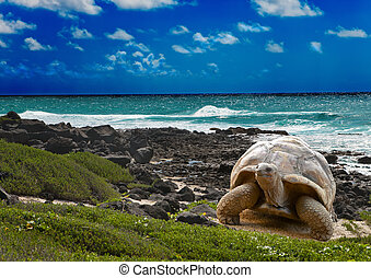 Large turtle at the sea edge on background of a tropical...