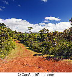 """red earth, Park """" Black river Gorge """". Mauritius"""