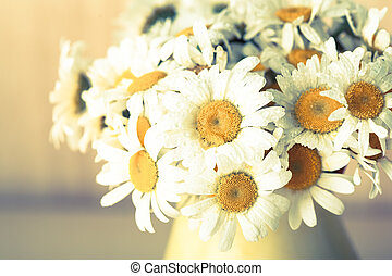 White daisies in vase with waterdrops