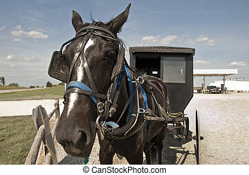 Horse and buggy - In a clash of cultures, an Amish horse and...