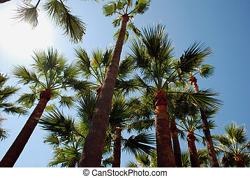 Palmtrees on the beach in Cannes