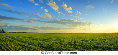 Panorama of sunrise over cereal field