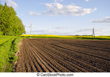 Plowed rapeseed rural agricultural fields blue sky - Plowed...