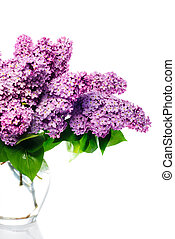 lilac bouquet isolated on white.Llight violet flowers in...