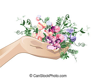 Hand and sweet pea flowers - Woman hand with sweet pea...
