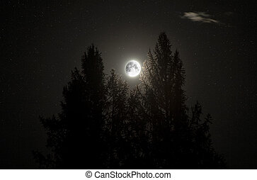 Moon - Full moon between two pines