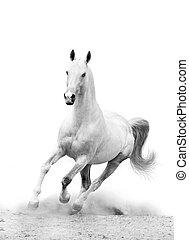 blanco, caballo, polvo