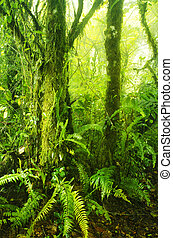 Mossy forest, cameron highlands Malaysia