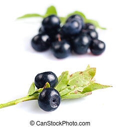 Bilberries in glass bowl close up isolated on white...