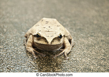 front view of frog