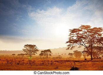 African landscape - Namibian  landscapes