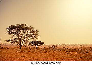 African landscapes - african landscapes