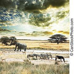 Africa - wild Africa