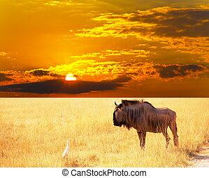 Antelope - antelope gnu crowd