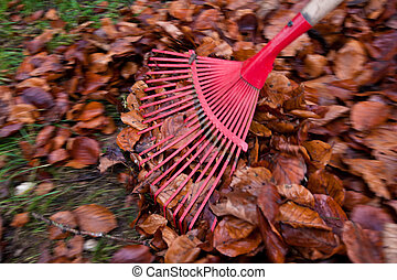 rake leaves. remove leaves. gardening