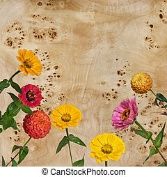 Flowers Zinnia and root of a poplar - Flowers Zinnia with...