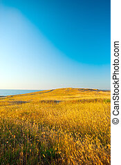 Wheatfield receding into the distance to the sea and sky
