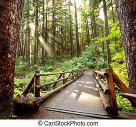 Boardwalk - boardwalk in forest