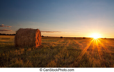 Sunset over grass field