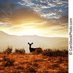 Deer - deers on meadow