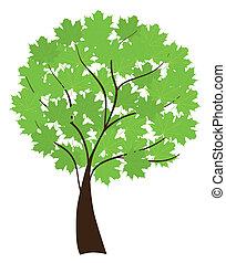 acero, albero