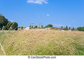 rural landscape in