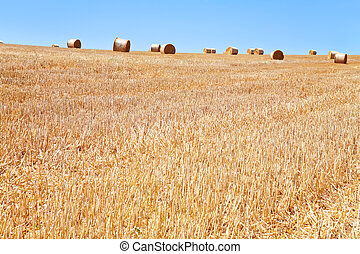 straw field after harvest