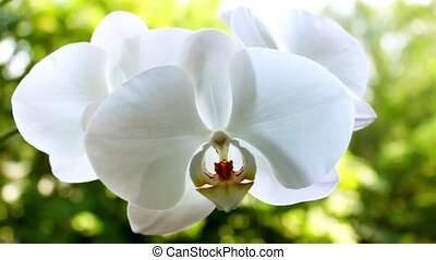 White orchid on the nature