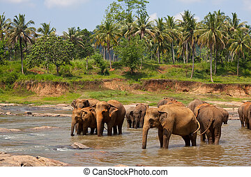 Elephants on Sri Lanka - Elephants on Sri Lanka