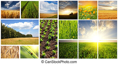 Fields collage
