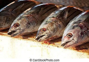 Fish market - fish market