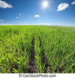 Field - ploughed field