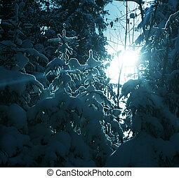Frozen trees - Christmas theme- frozen trees