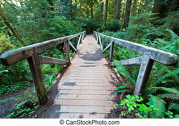 Footpath - footpath in redwood forest