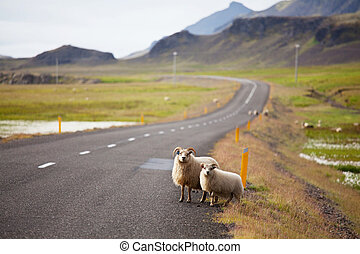 Iceland landscapes - landscapes in Iceland