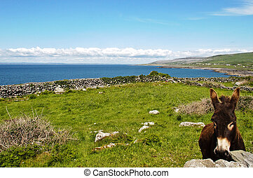 the burren national park county clare, ireland - the burren...