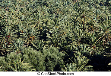 Palmtree valley in Morocco
