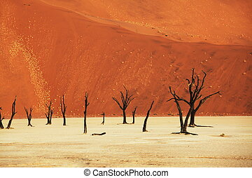 Namib desert - Dead valley in Namibia