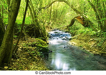 River in forest - Beautiful small river in forest