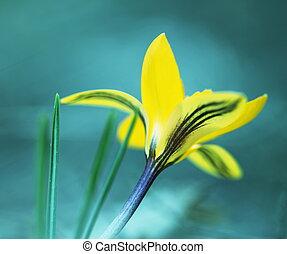 Spring flower - spring flower