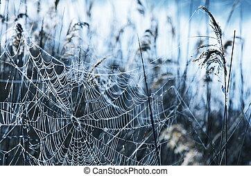 Spider-web - Spiderweb on the grass