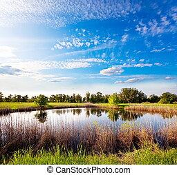Summer small lake - lake