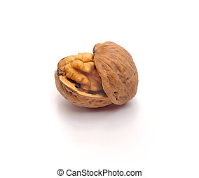 walnut - The split walnut which is represented on a white...