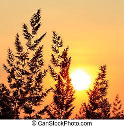 Plants silhoette of field in evening glow