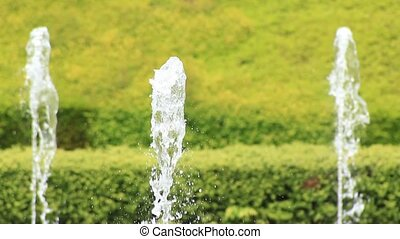 fresh green and fountain - I took a fountain backed by the...