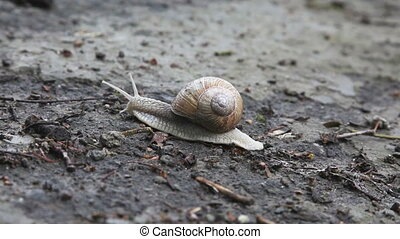 Snail crawling on the ground
