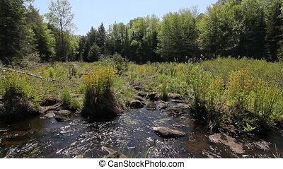 Ontario marshland. Two shots. - Wideshot of stream running...