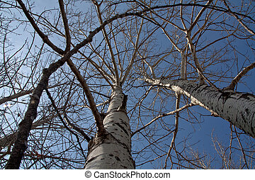 Looking Up - standing at the base of a tree and looking...