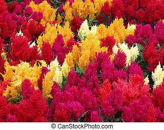 Vibrant Flowers - Vibrant Pink, Yellow, and white flowers in...